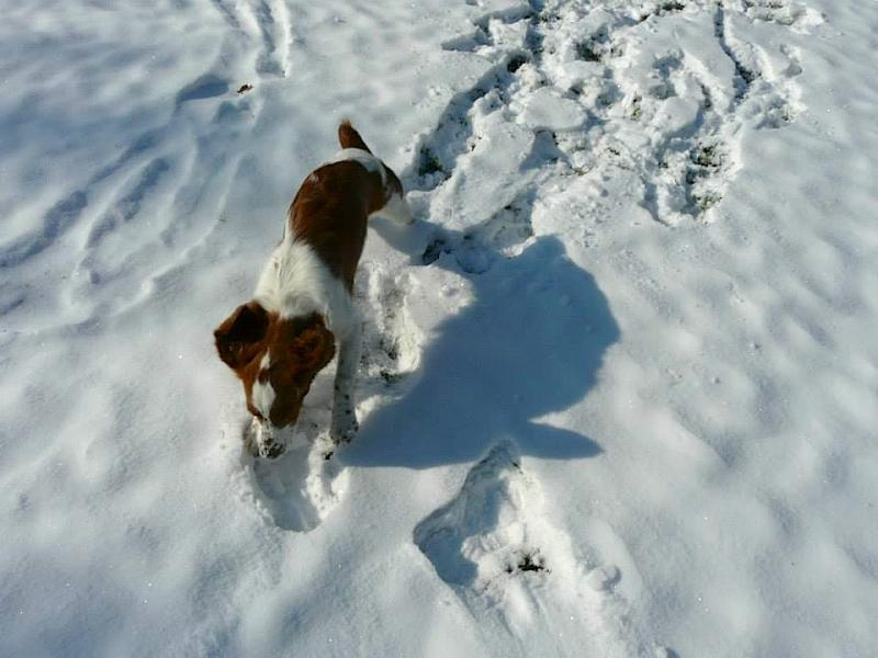 puppy Riff in snow