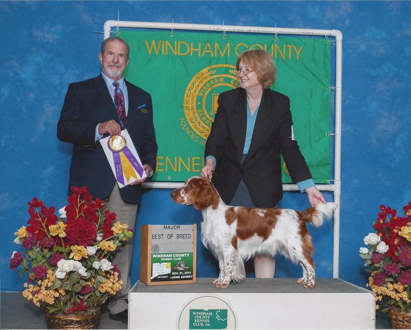 Destiny Welsh Springer Spaniel Best of Breed