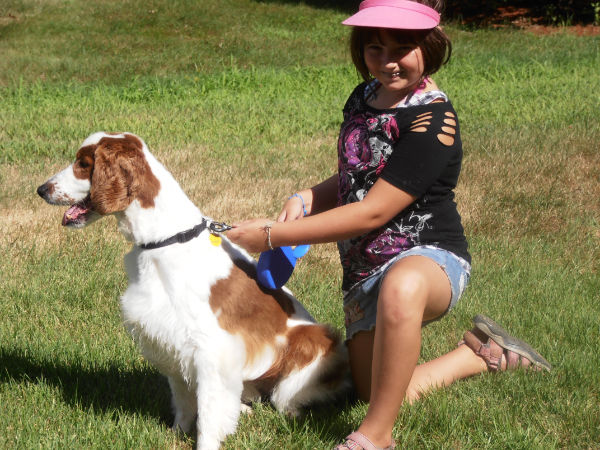 Welsh Springer Spaniel Archer Anna1