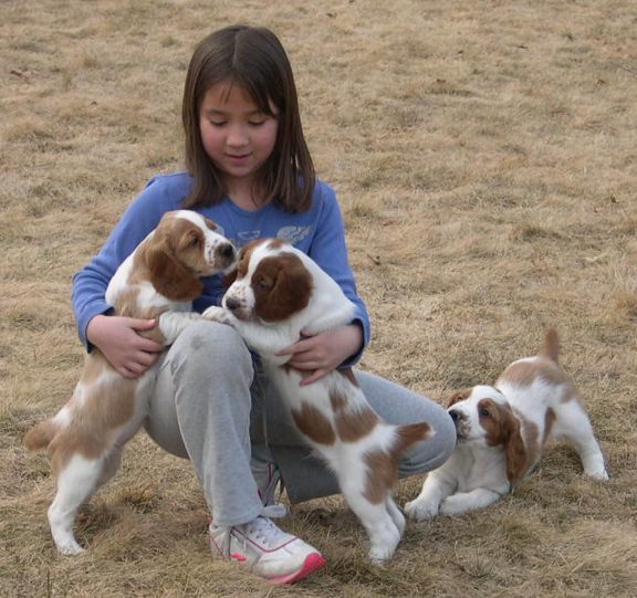 Welsh Springer puppies Alzahna Morgan Silverstone