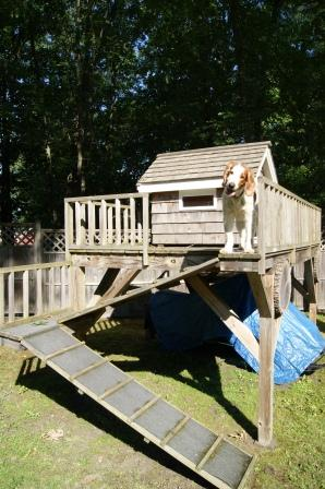 Welsh Springer Spaniel Meegan on her castle 2011